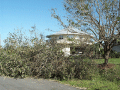 Image of devastation of down trees with a circular house still standing